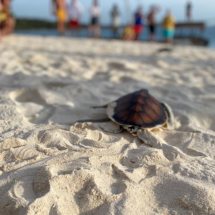 Turtle Release Day